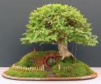 Baggins Bonsai