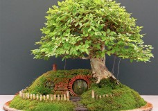 Baggins Bonsai Home by Chris Guise
