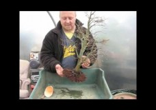 Repotting Bonsai by Graham Potter